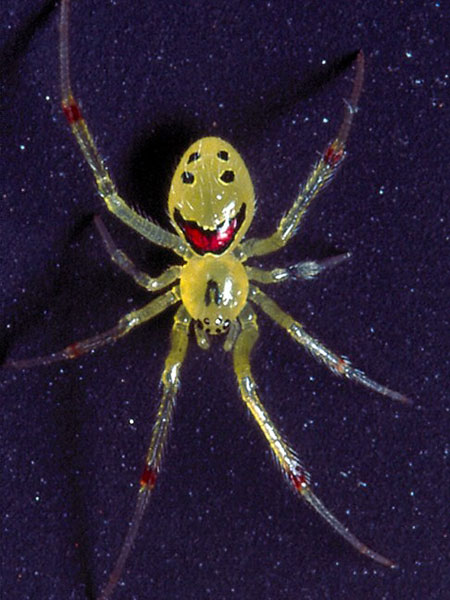 SpiderCAT_450x600