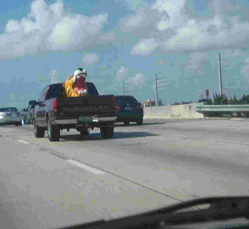 Lion in truck