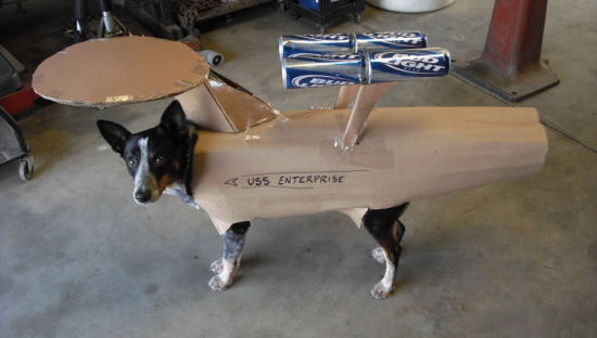Enterprise_dog-thumb-550x312-23077