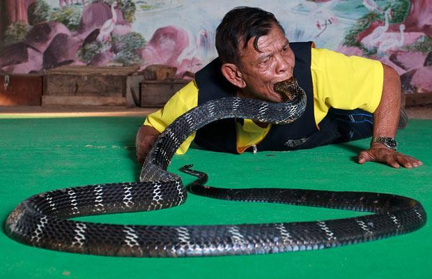 Snake-mouth_1545127i