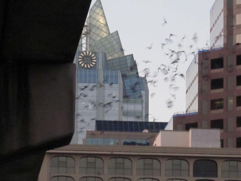 Bats n building 2