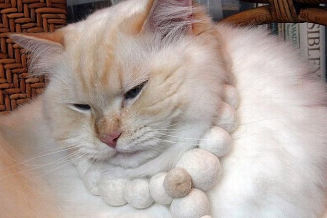 Cat_660