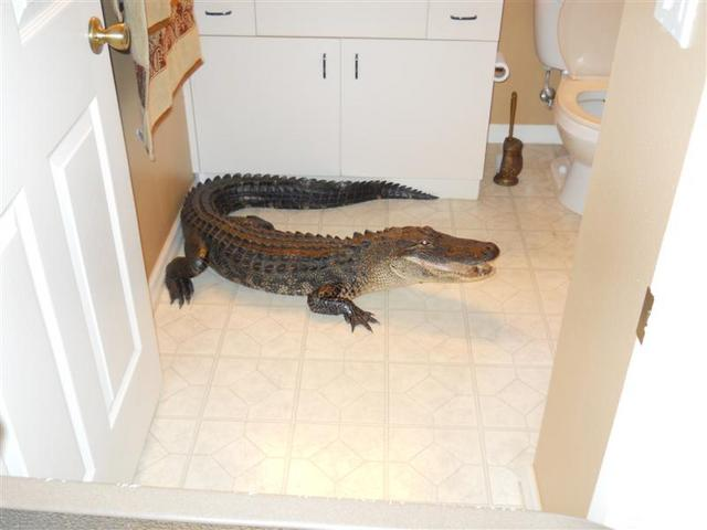 Gator-bathroom-423_rdax_640x480