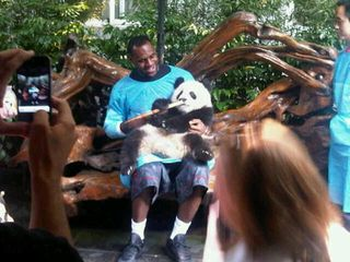1aa1lebron panda