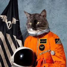 1aa1catsinspace
