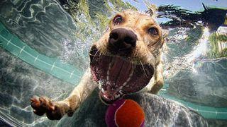 1aa1dogwater2