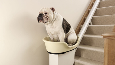 Dog_stairlift_rex