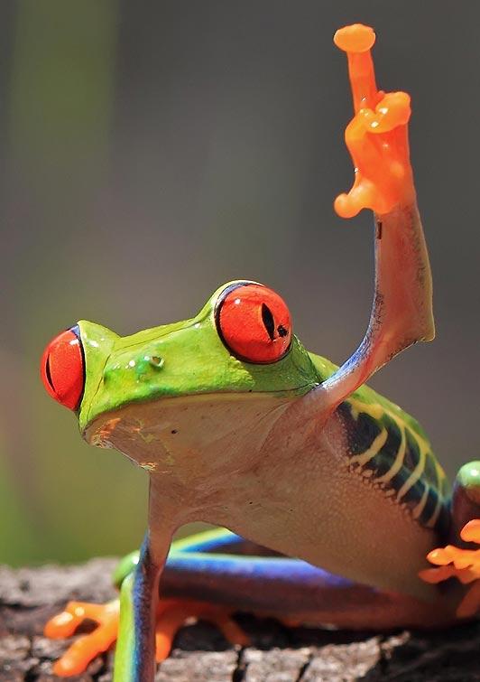 Frog_main-532_1469343a