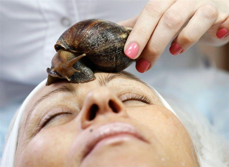 African_snail