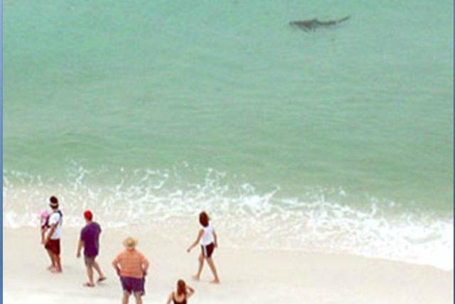 Shark2_s640x427