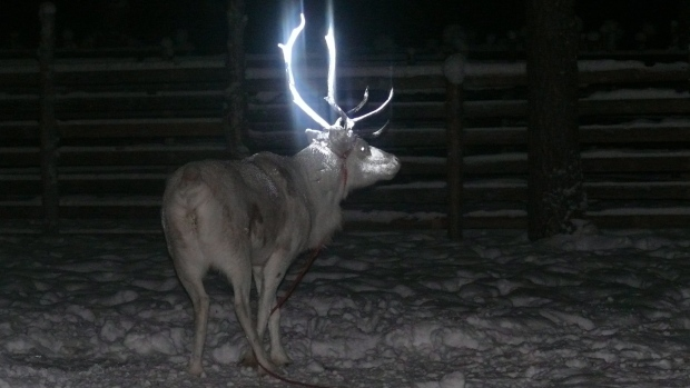 Finland-fluorescent-antlers