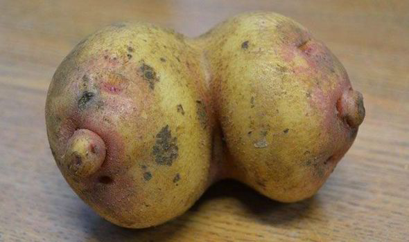 Potato-breasts-tits-funny-452972