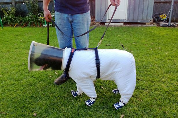 PAY-Beekeeping-dog