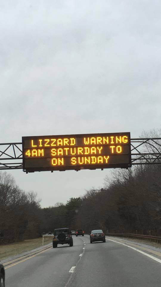 Lizzards