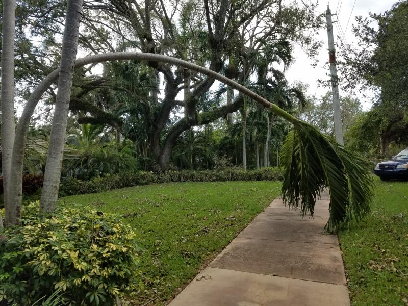 Sad palm