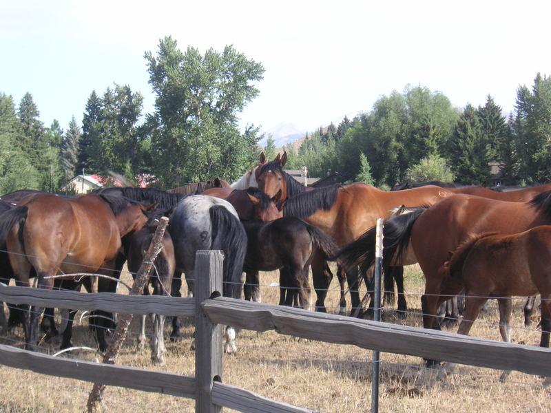 Horse_meeting