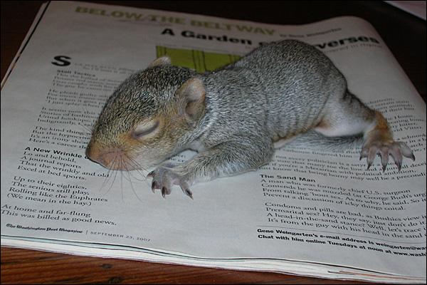 Lil_squirrel